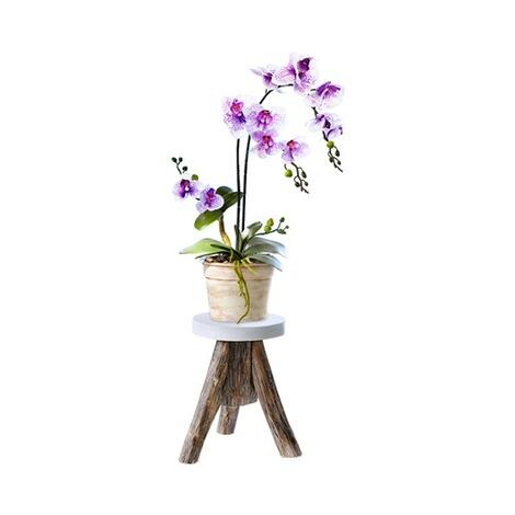 orchideen zauber online kaufen die moderne hausfrau. Black Bedroom Furniture Sets. Home Design Ideas